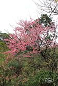 20130126平等里櫻花:IMG_7585.JPG