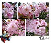 20100328-0329阿里山賞櫻:IMG_6800.JPG