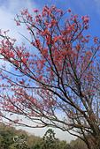20130202陽明山櫻花:IMG_7930.JPG