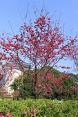 20130224中正紀念堂櫻花:IMG_9470.JPG