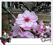 20100328-0329阿里山賞櫻:IMG_6847.JPG