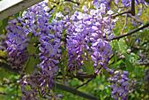 20140406紫藤咖啡園:IMG_0549.JPG
