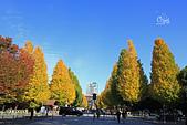 20171124-1128日本東京銀杏:IMG_0748.JPG
