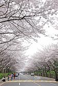 20180330-0410韓國賞櫻(上):IMG_2210.JPG