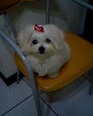 Joy&山茶花&Cherry:照片 024.jpg