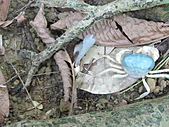 雙溪母樹林:IMG_2856.JPG
