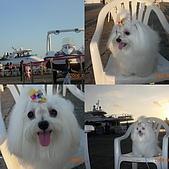 2008海洋博覽會:collage74.jpg