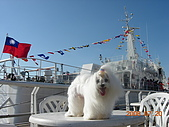 2008海洋博覽會:DSCN6622.JPG