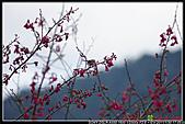 2011武陵農場:DSC06380P45.jpg