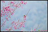 2011武陵農場:DSC06388P46.jpg