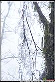 2011武陵農場:DSC05892P13.jpg