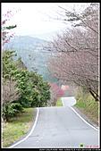 2011武陵農場:DSC06398P35.jpg