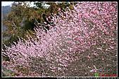 2011武陵農場:DSC06144P51.jpg