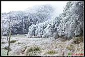 2011武陵農場:DSC05899P16.jpg
