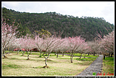 2011武陵農場:DSC06191P04.jpg