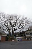 Tokyo:DSC03462.JPG