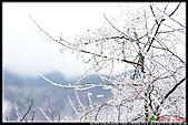 2011武陵農場:DSC05783P06.jpg