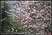 2011武陵農場:DSC06485P61.jpg