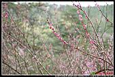 2011武陵農場:DSC06193P06.jpg