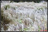 2011武陵農場:DSC05902P18.jpg