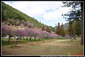 2011武陵農場:DSC06152P54.jpg
