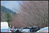 2011武陵農場:DSC06504P63.jpg
