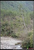 2011武陵農場:DSC06555P38.jpg