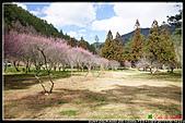 2011武陵農場:DSC06155P55.jpg