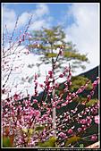 2011武陵農場:DSC06573P42.jpg