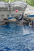 花蓮海洋公園:DSC01441.JPG