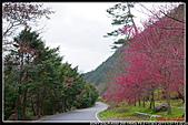 2011武陵農場:DSC06607P06.jpg