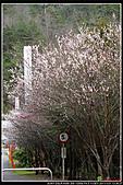 2011武陵農場:DSC06610P45.jpg