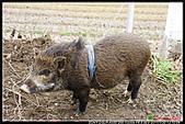 2011武陵農場:DSC06123P47.jpg