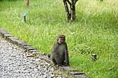 自然課~福山植物園:DSC00162.JPG