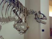 20100204看恐龍展:20100204082.jpg
