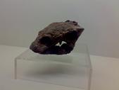 20100204看恐龍展:20100204081.jpg
