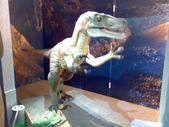 20100204看恐龍展:使用手機拍的....牠叫始祖鳥