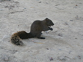 971202二二八公園野餐:我在吃東西,別吵我