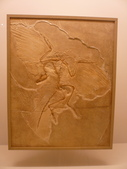 20100204看恐龍展:P1110842.JPG