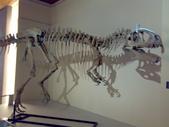 20100204看恐龍展:20100204091.jpg