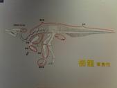 20100204看恐龍展:20100204092.jpg