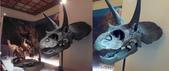 20100204看恐龍展:左是同事相機拍,右是我手機拍,顏色有差哦~