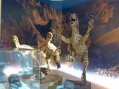 20100204看恐龍展:20100204085.jpg