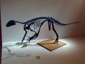20100204看恐龍展:20100204083.jpg