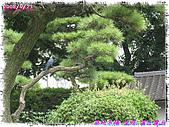 (第三天在富士電視台) 970921~0927日本東京自遊行:IMG_0154.JPG