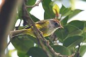 台灣野鳥:DSC_2859_64548.jpg