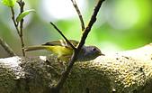 台灣野鳥:DSC_2043_63733.jpg