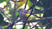 台灣野鳥:DSC_2887_64576.jpg