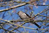 台灣野鳥:DSC04849_46092.jpg