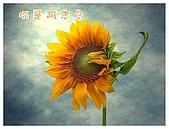 阿志與阿安專輯:1向日葵